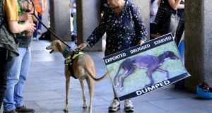 A protest outside the Department of Agriculture over greyhound exploitation. A Dáil debate has heard the dogs have a lifespan of 14 years but in Ireland the average was three to four years. Photograph: Cyril Byrne/The Irish Times.