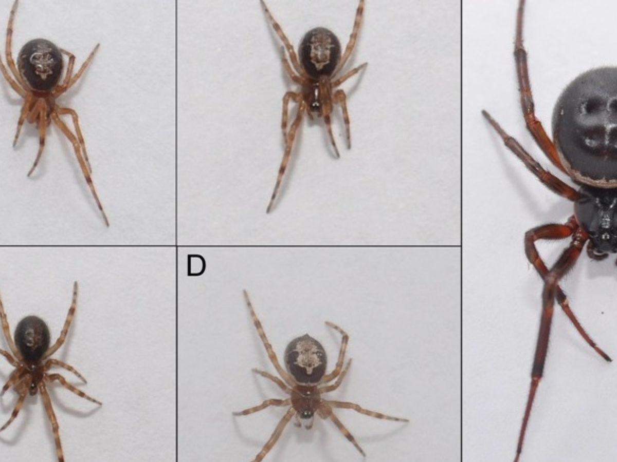 Ireland Under Attack From Spiders That Are Wiping Out Native Species