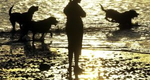 Making friends: dogs on the beach at the end of a warm and sunny day. Photograph: Eric Luke