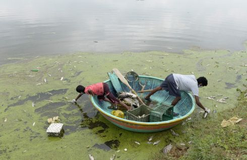 WASTELAND: Indian fishermen collect dead fish in Gandi Lake in Sangareddy district. Indian authorities said around 70%-80% of the fish in Gandi Lake had died after waste chemicals were released from a nearby industrial estate over the last 48 hours. Photograph: Noah Seelam/AFP/Getty Images