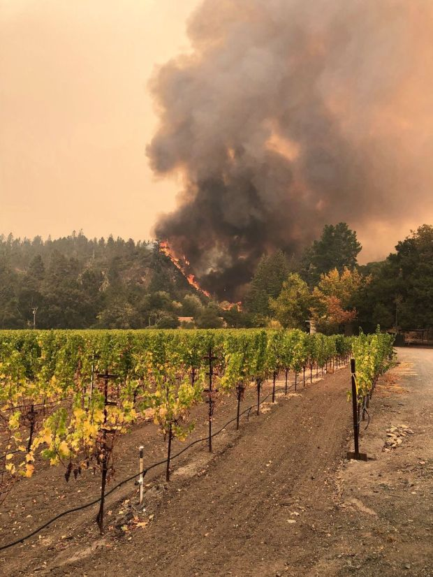 A wildfire burning near the Bellisimo Vineyards at Calistoga, California on Wednesday. Photograph: EPA/Adam Weidmann