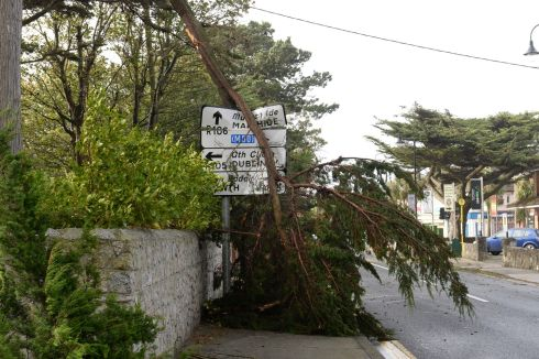 Fallen trees in Sutton as Hurricane Ophelia hits Dublin. Photograph: Dara Mac Donaill/The Irish Times