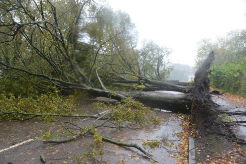 Hurricane 'Ophelia'.... fallen trees Marina Park, Cork City.  Photograph:  Michael Mac Sweeney/Provision