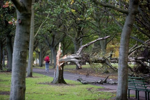 A view of a fallen tree  in Fairview Park , Dublin.  Photograph: Tom Honan / The Irish Times