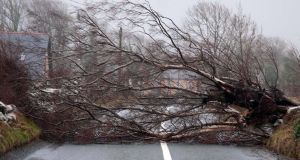 A downed tree blocking the road near Cong, Co  Mayo. Photograph: Paul Mealey