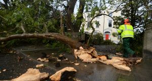 Tree surgeon James Moran working on a fallen tree at Bayswater Terrace, Sandycove during Storm Ophelia. Photograph: Cyril Byrne