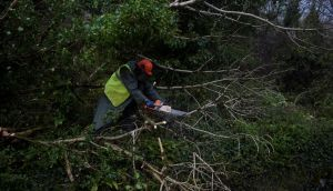 A worker clears fallen trees off a road with a chainsaw following  Storm Ophelia in the  Burren in Co Clare on Monday afternoon. Photograph:  REUTERS/Clodagh Kilcoyne