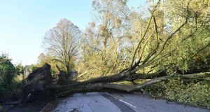 A road in southwest Cork is blocked by a fallen tree on Tuesday. Dozens of roads around the country remain blocked by fallen trees after Storm Ophelia swept over the country.  Photograph: Getty