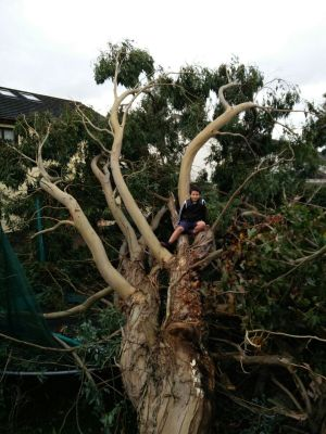 Lisa Gibbons, Corbally, Co Limerick: 'This is Cian Gibbons on a tree that fell in his garden in Corbally. It damaged his trampoline and treehouse.'