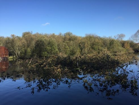 Maeve Lynch, Co Cork: 'Trees and debris floating in the Lough, in Cork. The trees and branches that fell are being cleared up now by the council.'