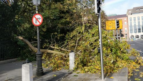 Luke Coyle, Dublin: 'A tree fell onto the pavement right in front of us outside St Stephen's Green'