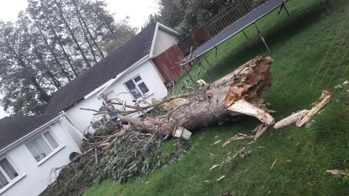 Anamaria Hovenden, Co Kildare: 'I was extremely lucky as 60ft tree nearly fell on my house.'