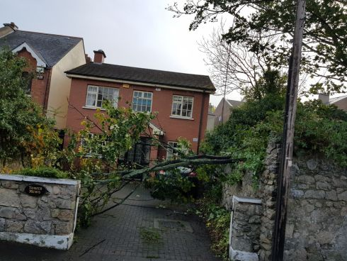 A fallen tree breaks an electric cable in Terenure, Dublin. Photograph: Ilja Melnikov
