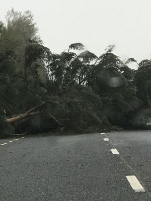 Warren Farrell, Co Wexford: 'Tree down outside the Maldron Hotel, on the road to Enniscorthy at 4.20pm.'