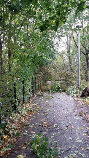 Nathon Oski, Cork City: 'Mardyk Walk in Cork after the morning winds. A number of trees have fallen victim to the wind's brute unrelenting force.'