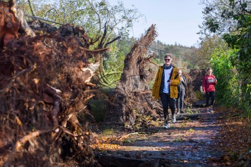 Felled trees which stood for over 100 years line the Marina in Cork city following Storm Ophelia. Photographs: Daragh Mc Sweeney/Provision