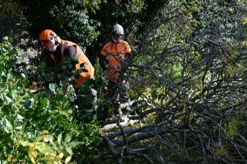 Reynolds Tree Services clearing fallen trees at Glencairn, Sandyford, yesterday.  Photograph: Cyril Byrne/The Irish Times