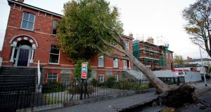 The uprooted  tree on Northbrook Road, Ranelagh, Dublin. Photograph:  Tom Honan