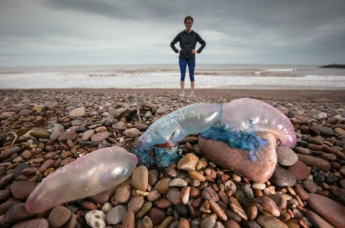STORM OPHELIA: A beach-walker poses beside jellyfish that were washed up on Sidmouth beach by Storm Ophelia, in Devon, England. Photograph: Matt Cardy/Getty Images