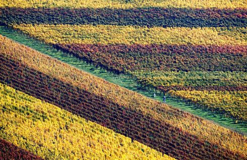 THROUGH THE GRAPEVINE: Coloured vineyards surround Hambach Castle, near Neustadt an der Weinstrasse, Germany.  Photograph: Ronald Wittek/EPA