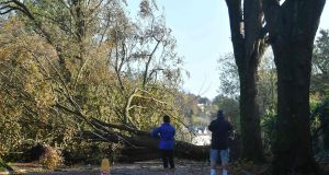 Fallen trees block a road in Cork on Tuesday. Photograph: Ben Stansall/AFP/Getty Images