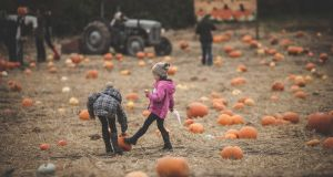 Children select pumpkins at Kennedy's Pumpkin Patch near Julianstown, Co Meath. Photograph: Wilde Photography
