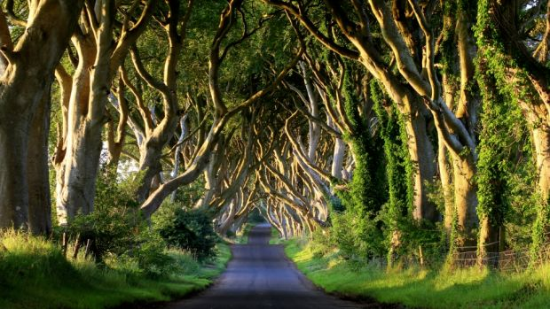 The Dark Hedges: just 15 minutes drive from Ballycastle