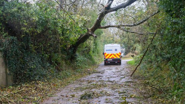 A Garda vehicle near Aglish, Co Waterford, where Clare O'Neill was killed after a tree landed on a car. Photograph: Patrick Browne