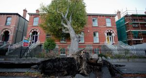 A fallen tree on Northbrook Road in Ranelagh, Dublin, following Storm Ophelia.  Photograph: Tom Honan