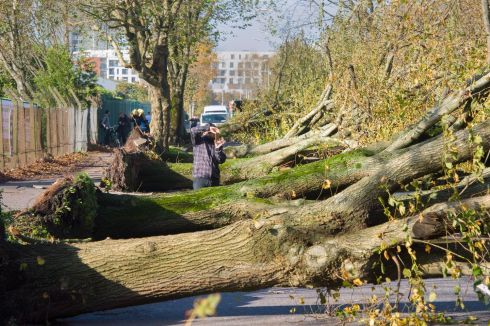 BOWING OUT: Trees which had stood for more than 100 years line the marina in Cork city following Storm Ophelia. Photograph: Daragh Mc Sweeney/Provision