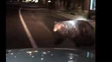 Police officer encounters bear walking on the street in California