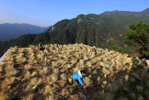HARVEST SEASON: Villagers dry crops in a village in the Chinese region of Guangxi Zhuang. Photograph: Reuters