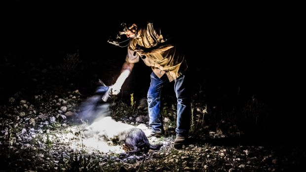 Larry Hromadka, a hunting guide, fires his pistol to end the suffering of a feral hog shot and wounded during a night boar hunt at the Ox Ranch in Uvalde, Texas. Photograph: Daniel Berehulak/New York Times