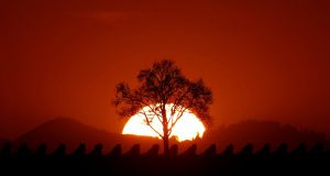 The sun sets behind a tree on a mild autumn evening in the vineyard of Osthoffen, outside Strasbourg, France. Photograph: Christian Hartmann / Reuters.