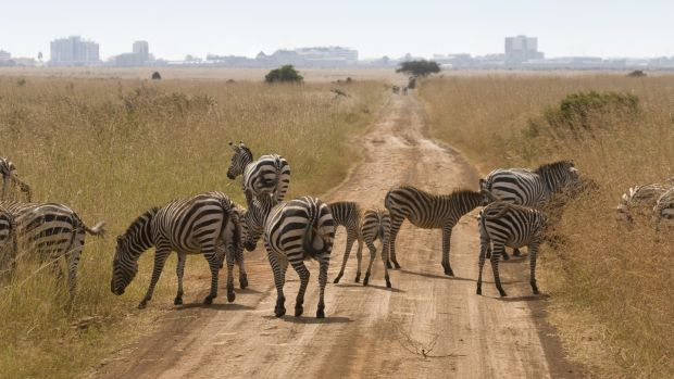 Nairobi National Park is a must for anyone visiting the city. Photograph: Getty Images