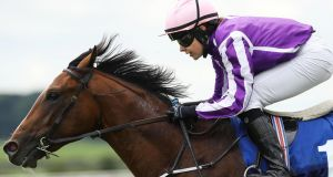 The Pentagon will be one of four Aidan O'Brien-trained runners in the Racing Post Trophy at Doncaster. Photograph: Lorraine O'Sullivan/Inpho