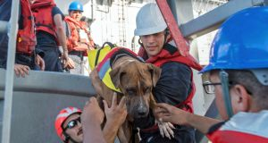 USS Ashland sailors rescue Zeus the dog from a  yacht in the Pacific Ocean. Photograph: Mass communication specialist 3rd class Jonathan Clay/US navy via AP