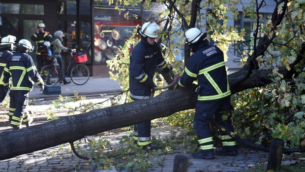 Firefighters work on a tree that fell during stormy weather in Hamburg. Photograph: Fabian Bimmer/Reuters