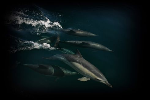 Winner - Wildlife and the Coast, Clodagh Blake,grace of the dolphins,Youghal, Co Cork