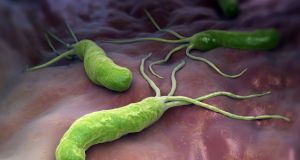 Helicobacter pylori is a Gram-negative, microaerophilic bacterium found in the stomach.