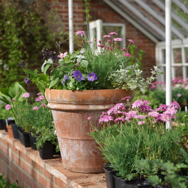 Summer bedding plants in a pot. Photo credit Richard Johnston