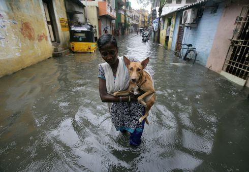 MONSOON RAINS: A woman carries a dog as she wades through a water-logged neighbourhood during rains in Chennai, India. Photograph: P Ravikumar/Reuters