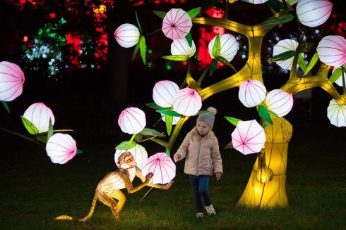 WILD LIGHTS: Dublin Zoo is brightening up winter evenings with giant lanterns and illuminated sculptures inspired by wildlife. Wild Lights runs until Sunday, January 7th. Photograph: Patrick Bolger