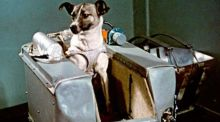 Even aged 9, I knew Laika the space dog was not coming back