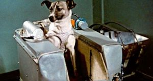 Laika, the stray dog from Moscow who was sent to space in November 1957.