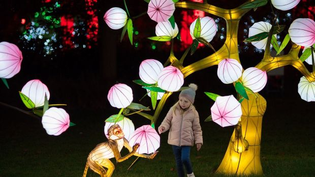Pictured at Wild Lights at Dublin Zoo is Beth Healy. This winter the Zoo is home to a magical night-time event featuring giant colourful lanterns and illuminated sculptures, inspired by wildlife.