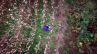 Drone helps rescue woman lost in U.S. cornfield