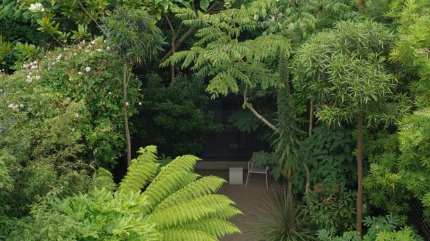 Leafy foliage plants growing in the shady Dublin space of garden designer Bernard Hickie. Photograph: Richard Johnston