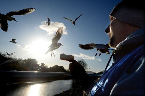 Felim Redmond from Bray feeding the passing gulls off the new boardwalk along the Dargle river. Photograph: Cyril Byrne