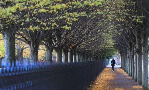 Herbert Park, Dublin in the afternoon this week.  Photograph Nick Bradshaw